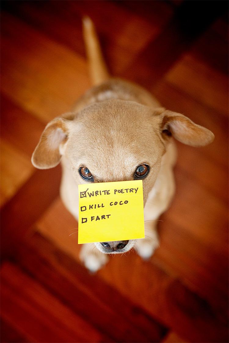 a Dogs checklist.