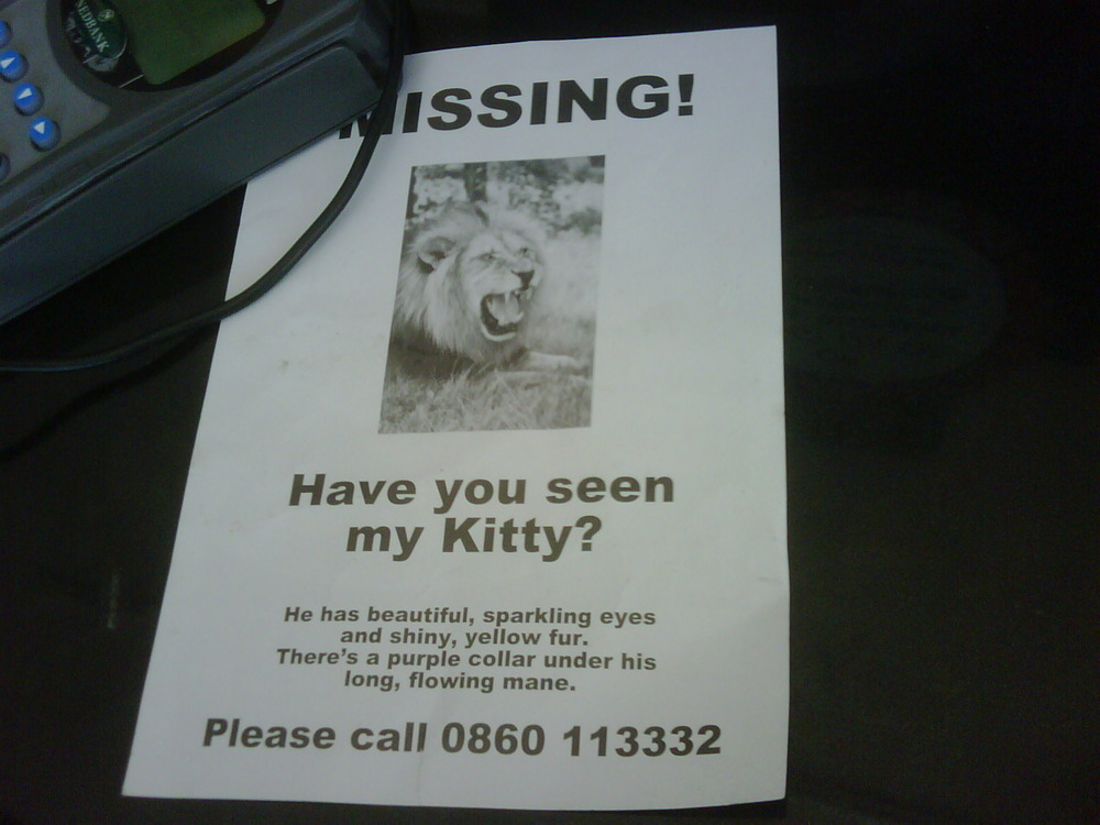 Are You serious? Missing kitty. As seen at Nandos parktown Quarter.