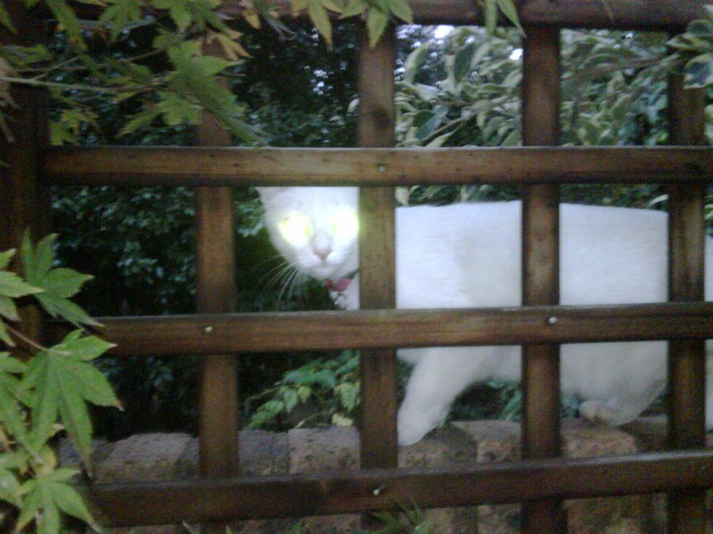 Satans cat!!!