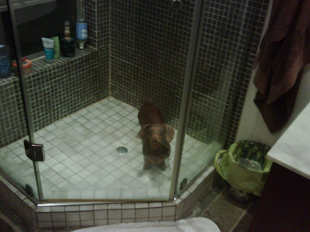 A trapped Sausage in the shower.