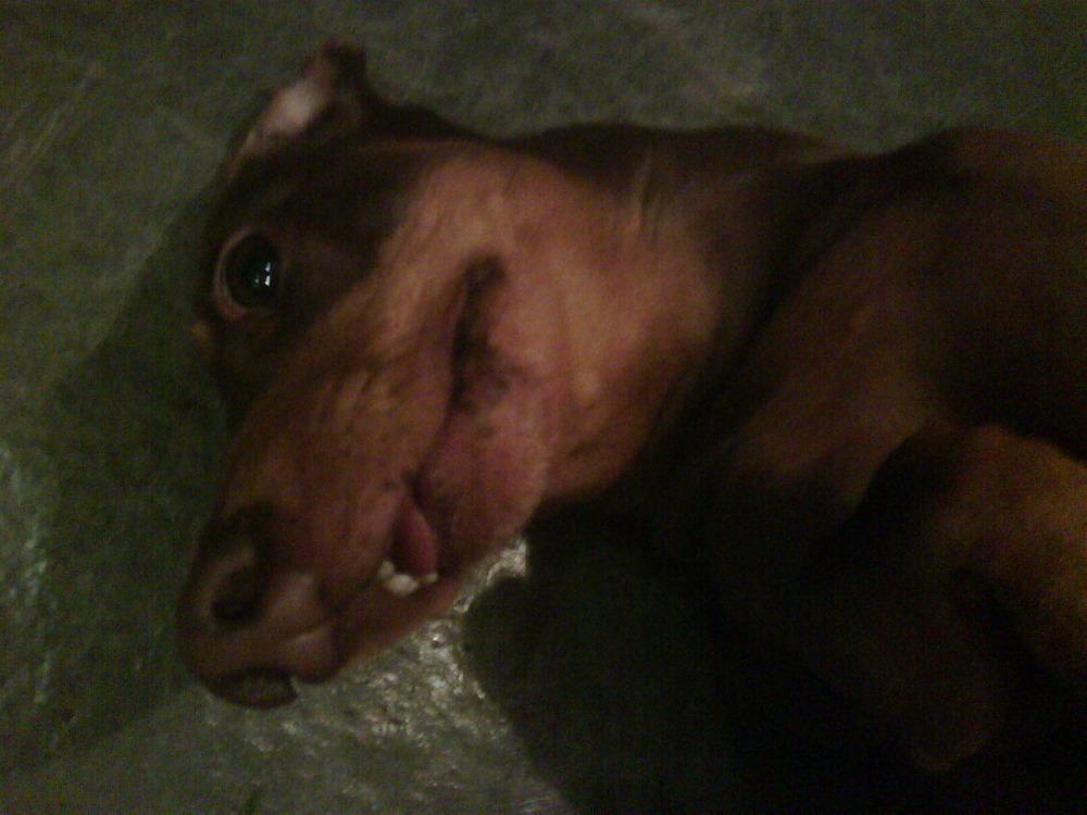 Chloe in a trance on the underfloor heated tiles…. BrghhhhzzzZ….zzzz…