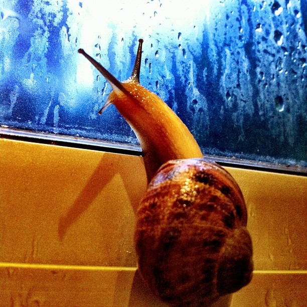 Slug life.