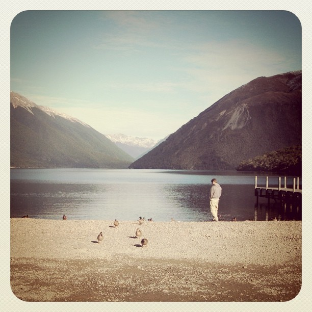The ducks have the best view. Bastards. #birdlife #Lake #NewZealand