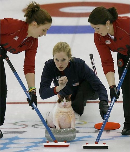 CAT curling : the new winter olympic sport.